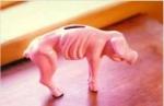 thin_piggy